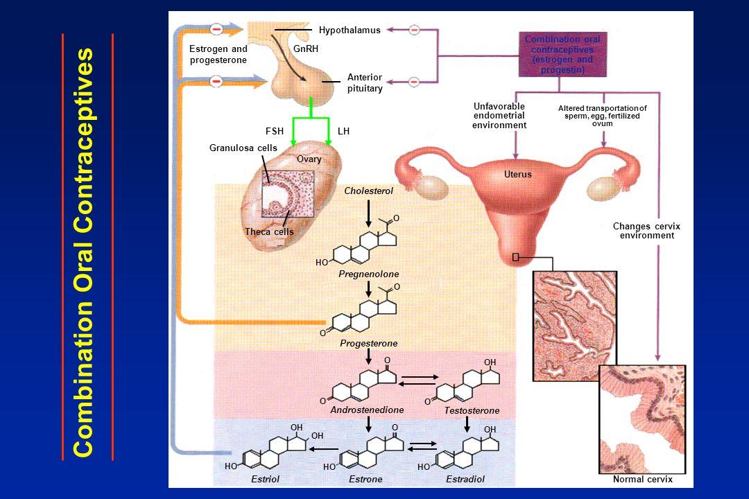 Pílula de Primeira Geração Etinilestradiol - doses altas (50mcg ou maior) Progestágeno - Levonorgestrel, noretisterona ou etinodiol diacetato.