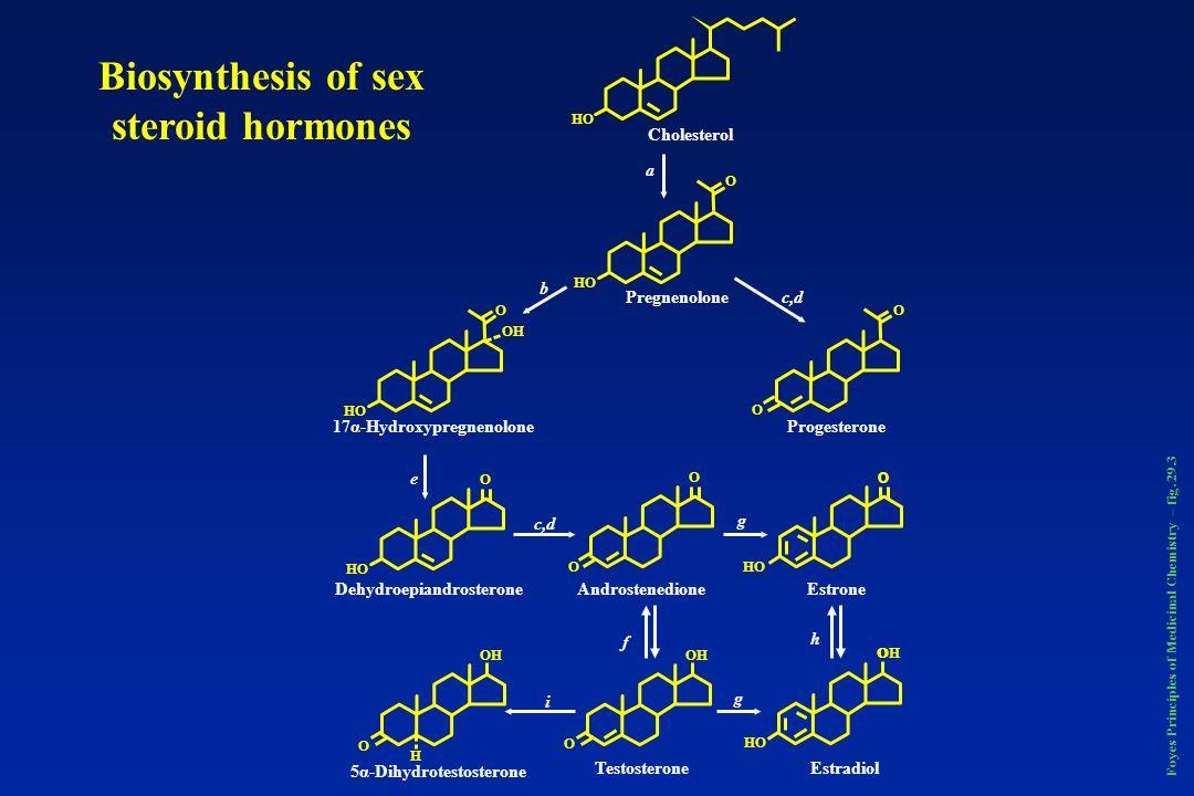 Estrogen metabolism Foyes Principles of Medicinal Chemistry – fig. 29.5