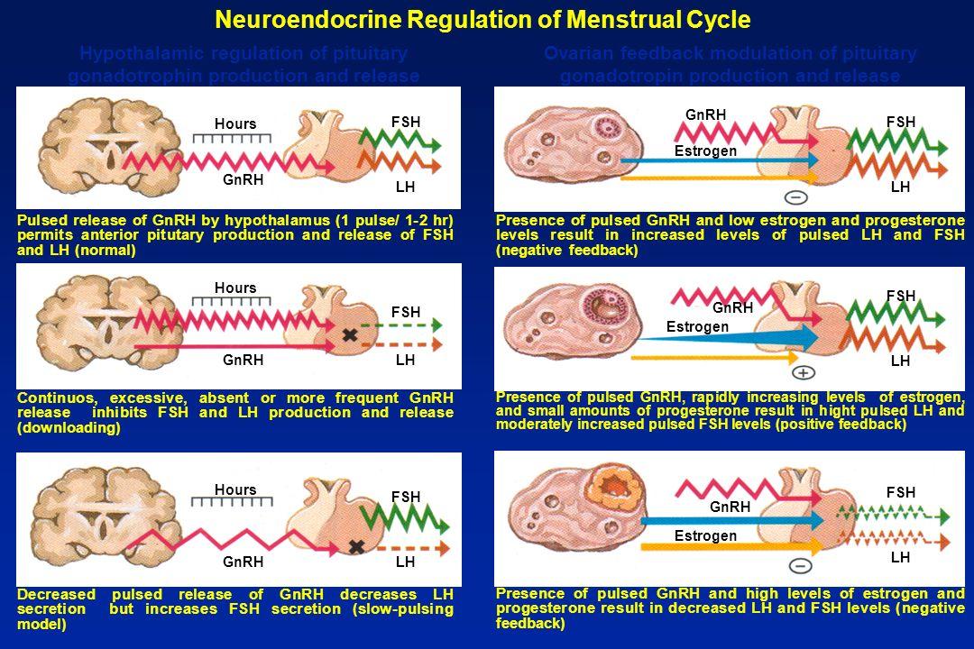 Hypothalamus GnRH (pulses /hr) Pituitary LH-FSH Ovary Estrogen Progesterone Correlation of serum gonadotrophic and ovarian hormone levels and feedback mechanisms Follicular phase FSH-LH (pulses/hr) 2 4 6 8 10 12 14 16 18 20 22 24 26 28 Days 500 400 300 200 100 50 40 30 20 10 Menses Serum levels LH mlU ml pg ml ng ml Progesterone 10 9 8 7 6 5 4 3 2 1 Estrogen FSH
