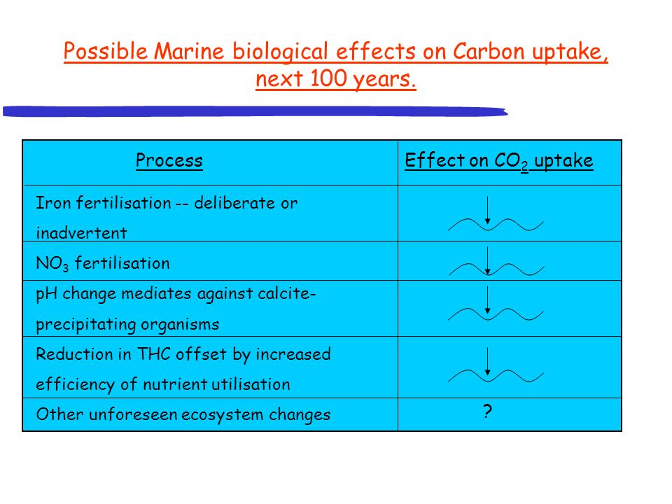 Marine carbon cycle summary: The ocean CO 2 sink is affected both by circulation and biology.
