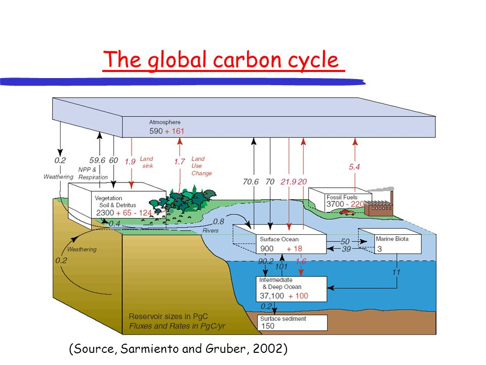 The global carbon cycle Most of the labile carbon on Earth is in the deep sea.
