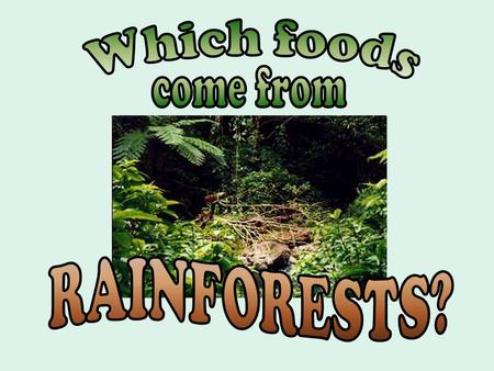 Where do bananas originally come from? Rainforests of Asia.