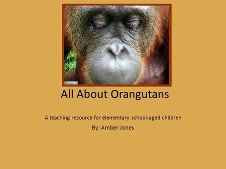 All About Orangutans A teaching resource for elementary school-aged children By: Amber Jones.