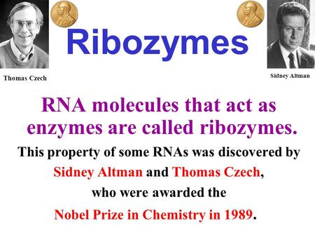 Ribozymes RNA molecules that act as enzymes are called ribozymes. This property of some RNAs was discovered by Sidney Altman and Thomas Czech, who were.