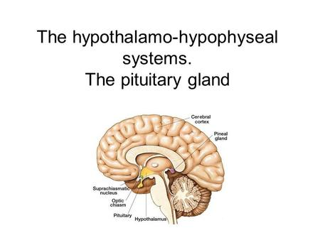 The hypothalamo-hypophyseal systems. The pituitary gland