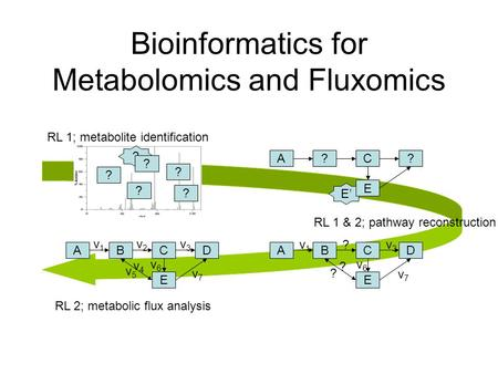 Bioinformatics for Metabolomics and Fluxomics E' ? ? ? ? ? ? A?C? E ABCD E v1v1 v2v2 v3v3 v4v4 v5v5 v6v6 v7v7 ABCD E RL 1; metabolite identification RL.