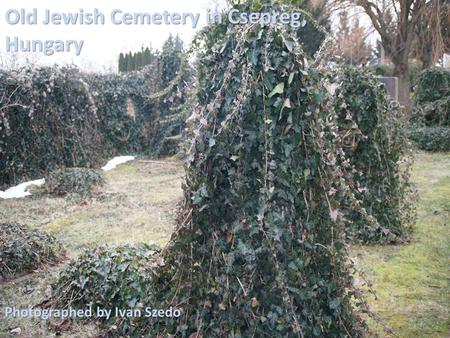 Old Jewish Cemetery in Csepreg, Hungary Photographed by Ivan Szedo.