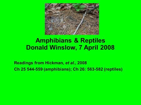 Amphibians & Reptiles Donald Winslow, 7 April 2008 Readings from Hickman, et al., 2008 Ch 25 544-559 (amphibians)‏; Ch 26: 563-582 (reptiles)‏