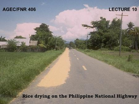 AGEC/FNR 406 LECTURE 10 Rice drying on the Philippine National Highway.