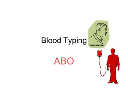 Blood Typing ABO. ABO Blood Group Three alleles A, B, O –or I A, I B, i Phenotypes of Blood types: A B AB O NOTE: A and B are codominant Blood Typing.