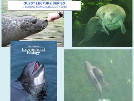 GUEST LECTURE SERIES IN MARINE MAMMAL BIOLOGY 2010.