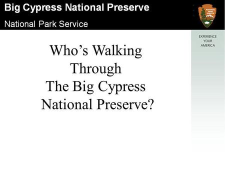 Who's Walking Through The Big Cypress National Preserve?
