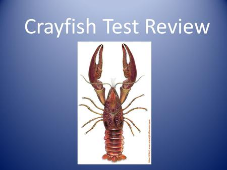 Crayfish Test Review.
