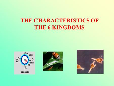 THE CHARACTERISTICS OF THE 6 KINGDOMS. Animal Kingdom * Food – Cannot make their own food. * Multi-cellular organisms * They have a nucleus (eukaryotic)