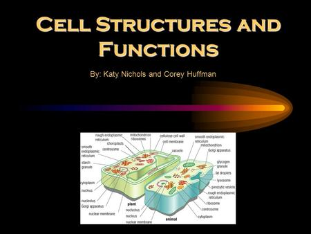 Cell Structures and Functions By: Katy Nichols and Corey Huffman.