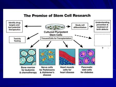 Discovery: Stem Cell Biology NIH Actions Continue infrastructure award program Characterize cell lines Stimulate more research on basic biology Train.