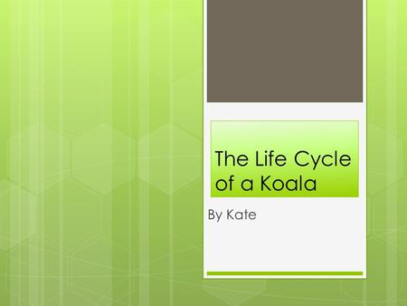 The Life Cycle of a Koala By Kate. First Phase of a Koala's Life Cycle  The first stage of a koala's life cycle is the koala is born from it's mother.