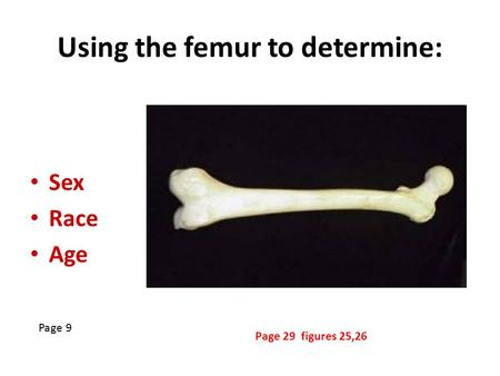 Using the femur to determine: Sex Race Age Page 9 Page 29 figures 25,26.