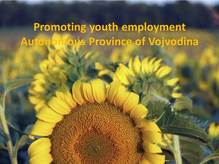 Promoting youth employment Autonomous Province of Vojvodina.