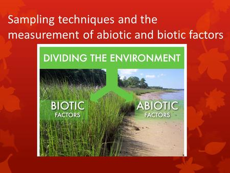 Sampling techniques and the measurement of abiotic and biotic factors.