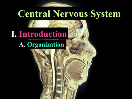 Central Nervous System I. Introduction A. Organization.