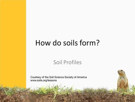 How do soils form? Soil Profiles. How do you start describing the soil? What do you see? What is different from top to bottom? How deep do roots go?