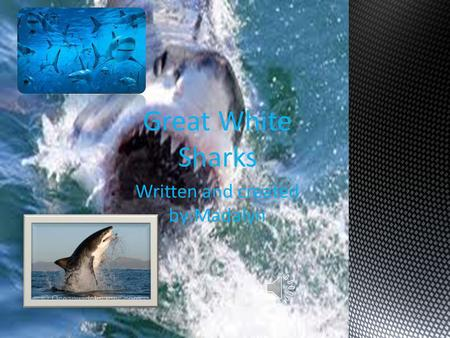 Written and created by:Madalyn Great White Sharks.