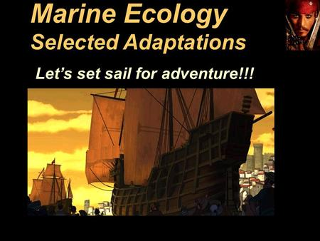 Marine Ecology Selected Adaptations Let's set sail for adventure!!!