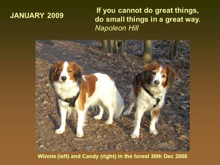 Winnie (left) and Candy (right) in the forest 30th Dec 2008 If you cannot do great things, do small things in a great way. Napoleon Hill JANUARY 2009.