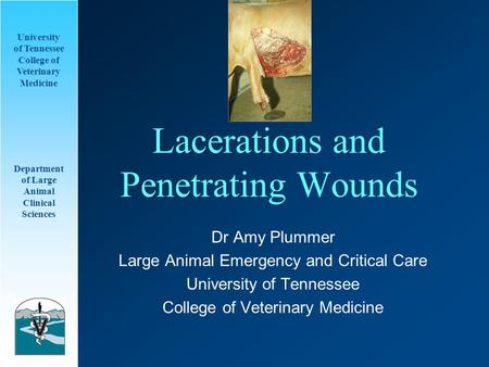 University of Tennessee College of Veterinary Medicine Department of Large Animal Clinical Sciences Lacerations and Penetrating Wounds Dr Amy Plummer Large.