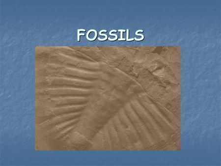 FOSSILS. Start with Living Organism The organism can be either a plant or an animal.
