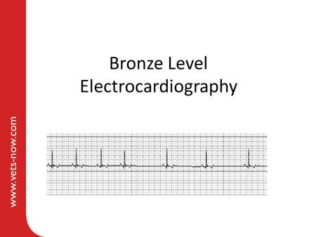 Www.vets-now.com Bronze Level Electrocardiography.