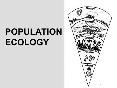 POPULATION ECOLOGY. YOU MUST KNOW… HOW DENSITY, DISPERSION, AND DEMOGRAPHICS CAN DESCRIBE A POPULATION THE DIFFERENCES BETWEEN EXPONENTIAL AND LOGISTIC.
