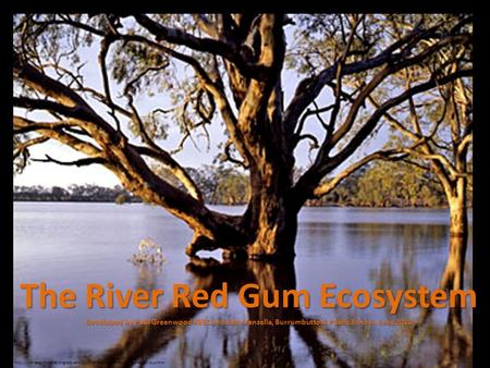 The River Red Gum Ecosystem Developed by Paul Greenwood REEC and Sara Vanzella, Burrumbuttock Public School, June 2010