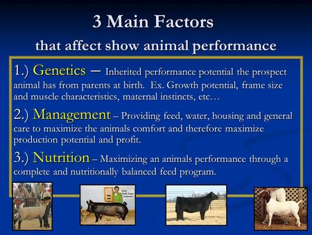 3 Main Factors that affect show animal performance 1.) Genetics – Inherited performance potential the prospect animal has from parents at birth. Ex. Growth.