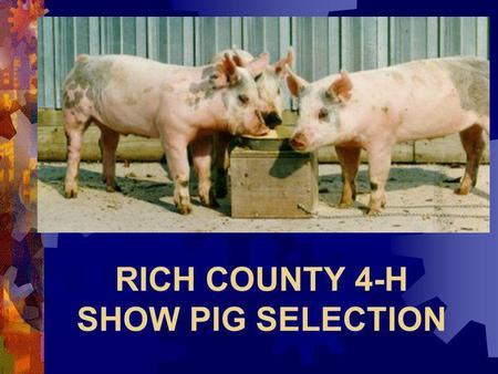 RICH COUNTY 4-H SHOW PIG SELECTION Darrell Rothlisberger.