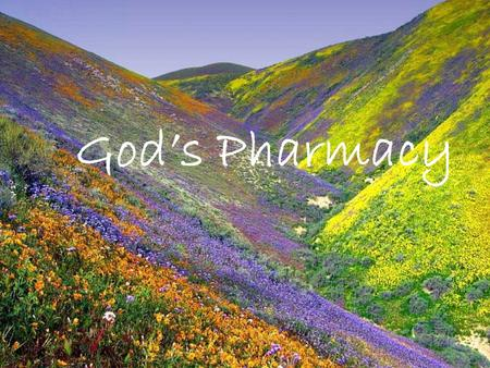 God's Pharmacy It's been said that God first separated the salt water from the fresh, made dry land, planted a garden, made animals and fish... All before.