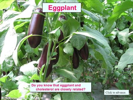 Do you know that eggplant and cholesterol are closely related? Do you know that eggplant and cholesterol are closely related? Eggplant Click to advance.