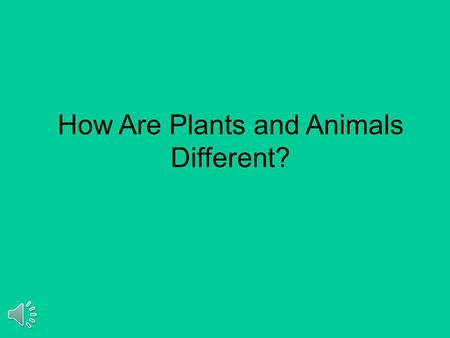 How Are Plants and Animals Different? Animals cannot make their own food. Plants can make their own food.