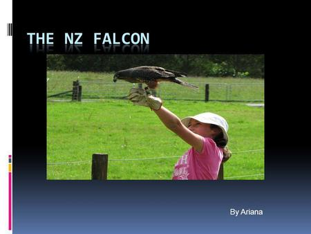 By Ariana. Fact file for the NZ Falcon  Scientific name: Kerearea  classification:  Size:45cm, female larger.  Colour: black, white and brown  Lives: