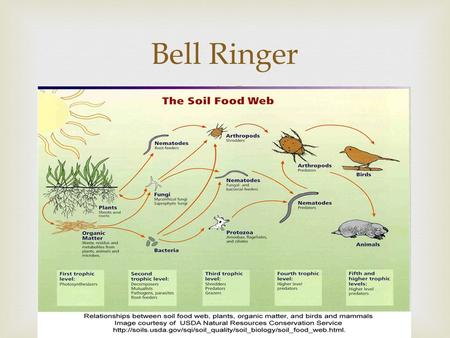  Bell Ringer.  1.Can a food web or food chain ever show abiotic factors? 2.A food web shows life at the [population, community, ecosystem] level. (Pick.