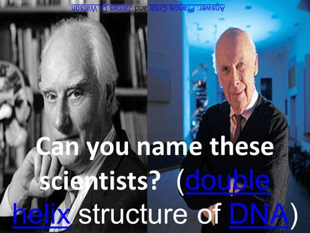 Can you name these scientists? (double helix structure of DNA)double helixDNA Answer: Francis CrickAnswer: Francis Crick and James D. WatsonJames D. Watson.