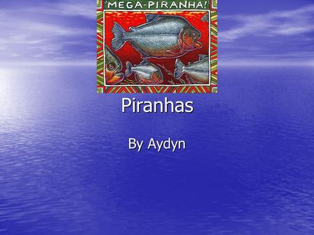 Piranhas By Aydyn. Home Many piranhas live in South America. Many piranhas live in South America.
