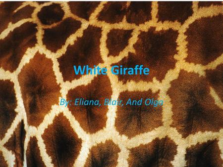 White Giraffe By: Eliana, Blair, And Olga. SIZE The same height as the real white giraffe. The White Giraffe is the same size as the real giraffe. Males.