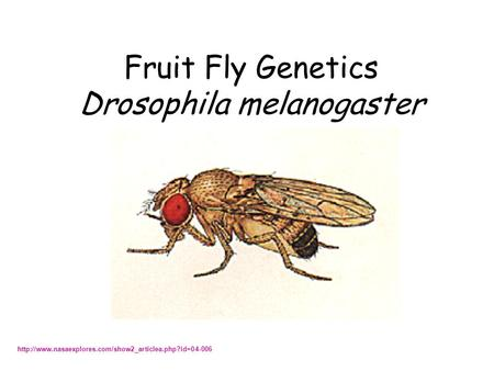genetics of drosophilia Start studying drosophila lab learn vocabulary, terms, and more with flashcards, games, and other study tools.