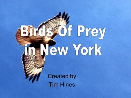 Created by Tim Hines. Table of Contents Peregrine Falcon Osprey Bald Eagle Red Tailed Hawk Broad Winged Hawk Cooper's Hawk Sharp Shinned Hawk Barred Owl.