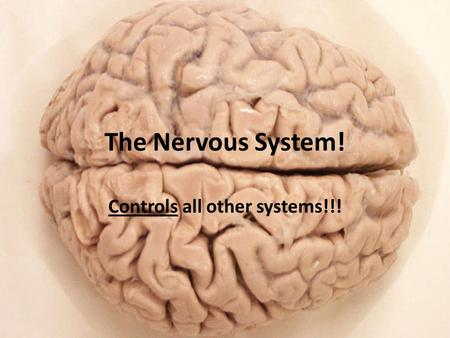 The Nervous System! Controls all other systems!!!.