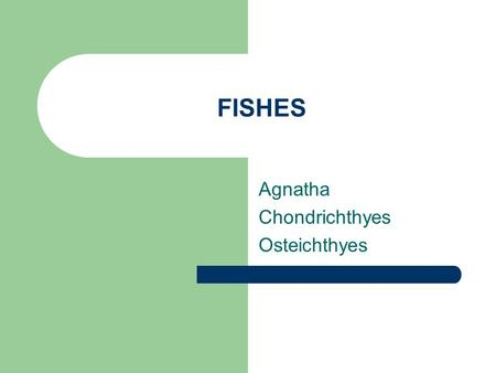 FISHES Agnatha Chondrichthyes Osteichthyes. General Characteristics Ectothermic Vertebrates Have scales Swim with fins Almost all exclusively aquatic.