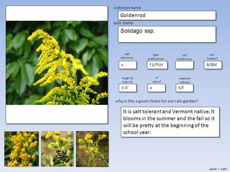 Place picture here make blank copies of this slide place picture here make blank copies of this slide common name Goldenrod latin name Solidago ssp. salt.
