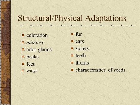 Structural/Physical Adaptations